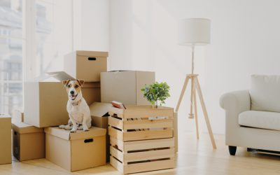 Thriving in Uncertainty: XONEX Relocation Services